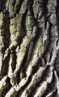 Holz-5